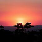 Smoky Sunrise by © Loree McComb