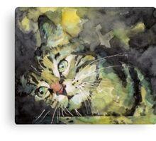 Little Tabby Canvas Print