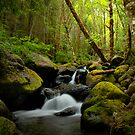 Canyon Creek Small Waterfall by Charles & Patricia   Harkins ~ Picture Oregon