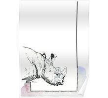 Why they matter (Rhinocerotidae) Poster