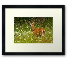 FIELD OF DAISIES Framed Print