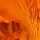 Orange Fungi Tunnel Of Love by Jean Gregory  Evans
