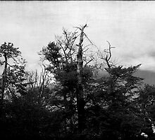 Nature in black and white VIII by Anne Staub