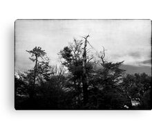 Nature in black and white VIII Canvas Print