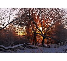 Burning Trees, a winters sunrise Photographic Print