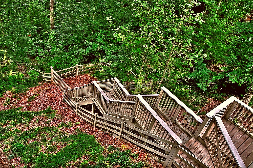 Stairway to a Mountain Forest by Kate Eller