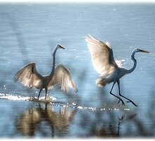 Water Ballet  by Saija  Lehtonen