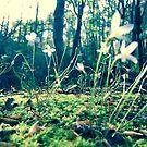 flower by merrypranxter