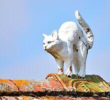Stuck-Up Cat by Steve