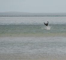 manta ray leaping by sandyprints