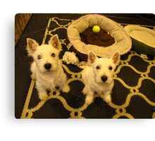 Westie Pups Canvas Print