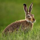 A Pause and a Jackrabbit by EchoNorth