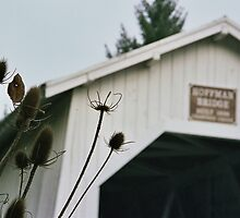 Thistles at Hoffman Bridge. Linn County, Oregon. by Christina Weber