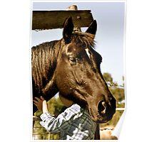 Big horse, big hat, little girl Poster