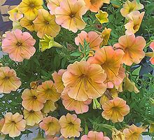 Pink and Yellow petunia Flowers by bloomingvine
