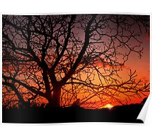 Tree against sunset Poster