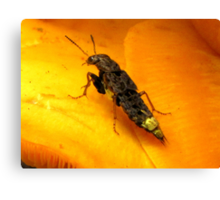 """""""I Wish I Was A Real Firefly"""" Canvas Print"""