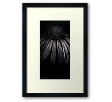 Moments in the Monochrome Garden #27 Framed Print