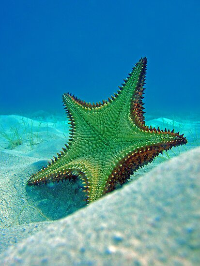 Starfish by Leon Heyns