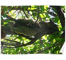 Tree hammock Poster