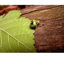 Weird and Green Bug Photographic Print