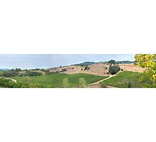 Vineyard Landscape Photographic Print