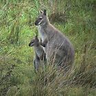 The King Island Wallaby by Larry Lingard-Davis