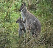 The King Island Wallaby by cullodenmist
