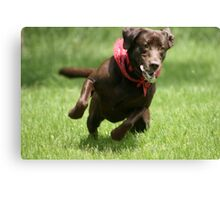 Lab in Motion Canvas Print