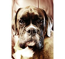 Luthien -Boxer Dogs Series- Photographic Print