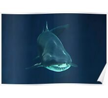 Menacing Shark Poster
