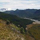Green Again. Mount St Helens by Olga Zvereva