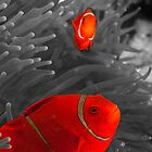 Spinecheek Anemonefish - selective colourisation by Erik Schlogl