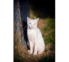 Van Cat 2 Photographic Print
