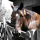 Selective Color Country Horse by USrealmArt