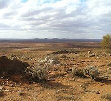 The Living Desert by DashTravels