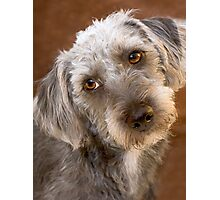Pooch Portrait Photographic Print