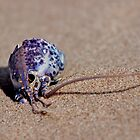 Blue Lobster Shell by Kathleen Daley