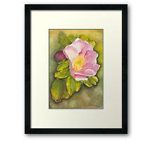 Rambling Rose on a Danish beach Framed Print