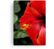 Hibiscus Macro Canvas Print