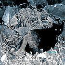 jungle cat by DreamCatcher/ Kyrah