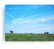 Dumb-ass Horses, Cheshire Canvas Print
