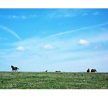 Dumb-ass Horses, Cheshire Photographic Print