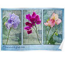 Sweet-peas  Poster