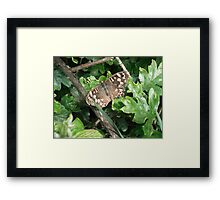 Brown Spotted Butterfly Framed Print