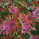 Zingy Leaves by Monnie Ryan