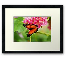 Common lacewing butterfly on pink flowers Framed Print