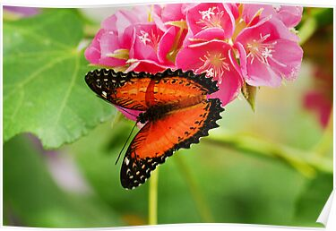 Common lacewing butterfly on pink flowers by Thad Zajdowicz