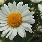 summer flower by NordicBlackbird
