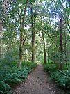 Paradise Walk, Bunya Mountains N P, Queensland (2) by Margaret  Hyde